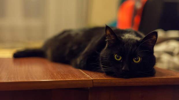 Почему я теперь боюсь выносить мусор по ночам. Странный случай с чёрным котом