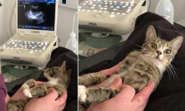 Беременная кошка из приюта нашла свое счастье Счастливый конец, беременность, ветеринар, животные, котята, кошки, удачное фото, узи