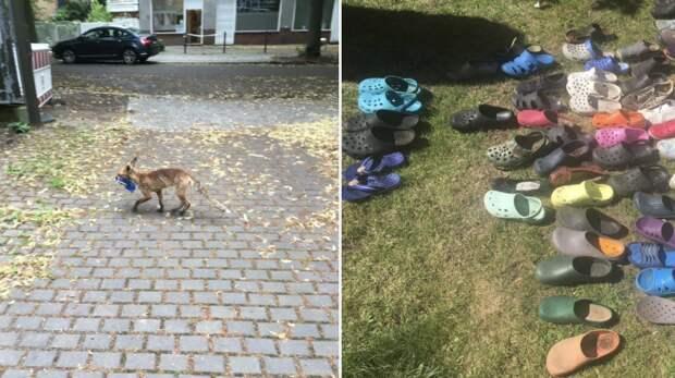 Рыжий воришка украл у немцев сотни пар обуви