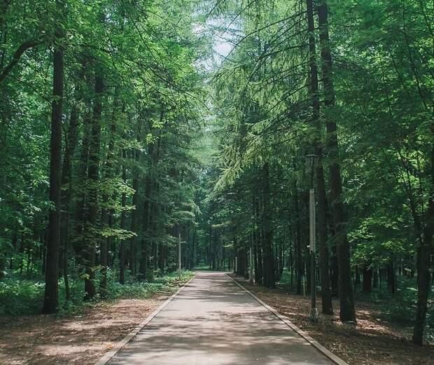 Километровая кольцевая беговая дорожка появилась в нижегородском парке «Швейцария»