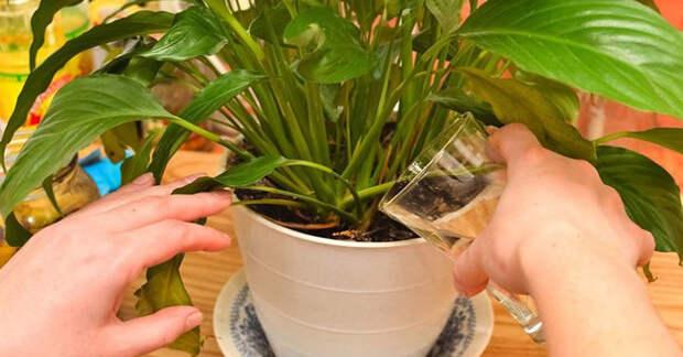 Реанимировать растения просто — главное знать, как это сделать!