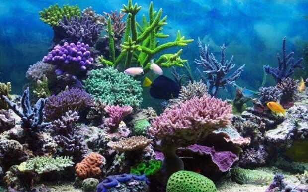 Что представляют из себя кораллы, они живые или растения?