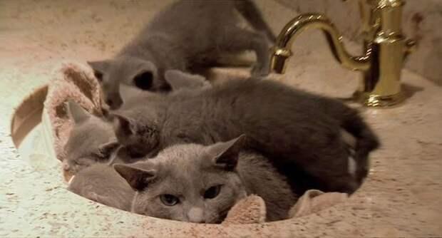 Не скрыться котята, кошка, прятки
