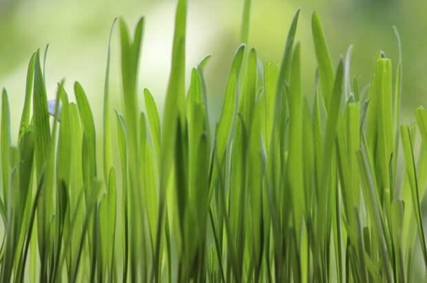 Насколько хорошо содержится газон в вашем дворе? — новый опрос