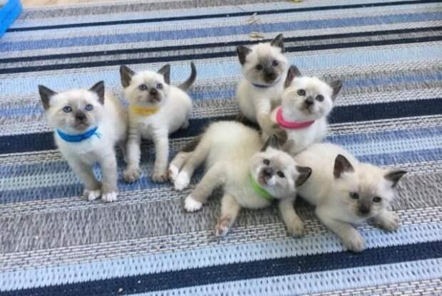 Уличной кошке дают приют и помогают вырастить 6 невероятно красивых котят