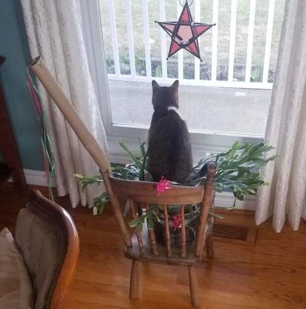 Не родился ещё человек, который смог бы дать отпор кошачьей наглости