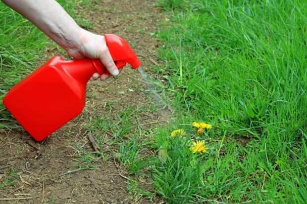 Гербициды применение в сельском хозяйстве