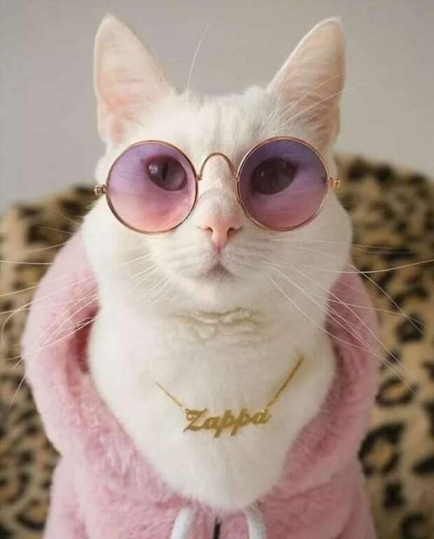 Прикольные фотографии котиков. Кити кити юмор. Подборка milayaya-cat-milayaya-cat-33220320102020-15 картинка milayaya-cat-33220320102020-15