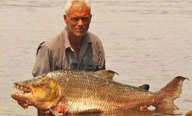 10 самых опасных рыб, выловленных в реках
