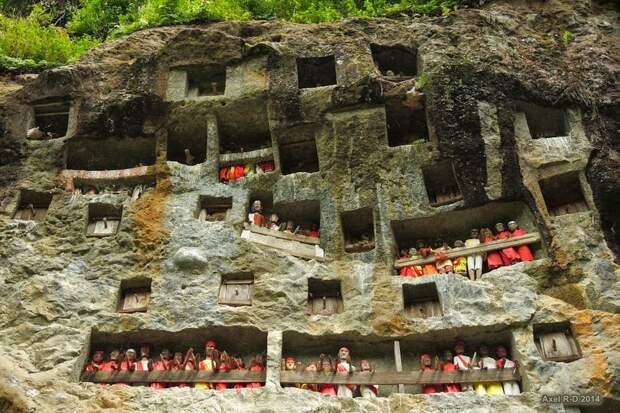 Необычные похоронные ритуалы вИндонезии