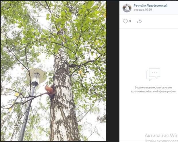 Фото дня: рыжий грызун попал в объектив в парке «Дружбы»