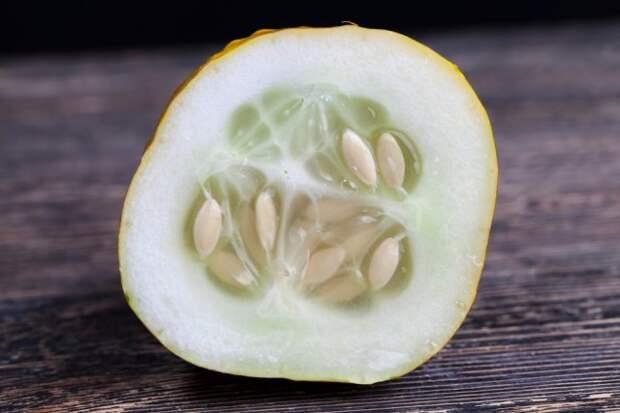 Как правильно собрать семена огурца