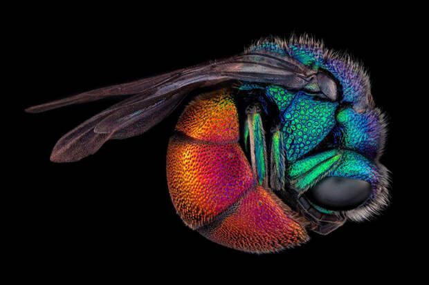22 лучших фото конкурса микрофотографии Nikon Small World2021