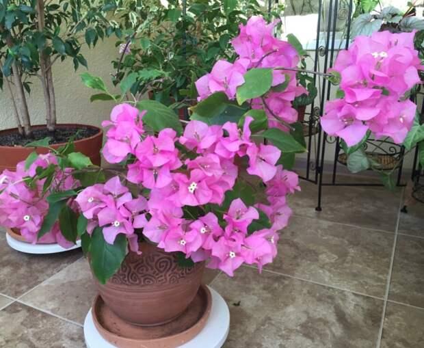 Как русская красавица приручила тропические лианы