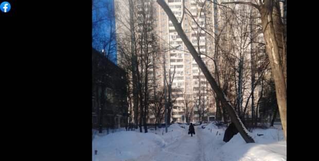 Дерево на Инженерной не является аварийным – управа