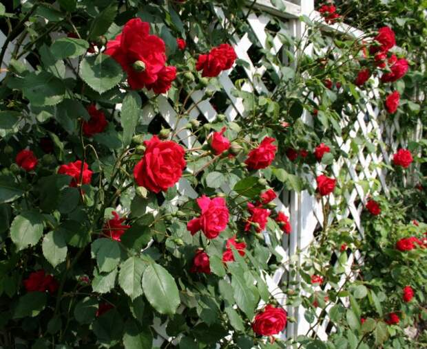 Решетка для роз