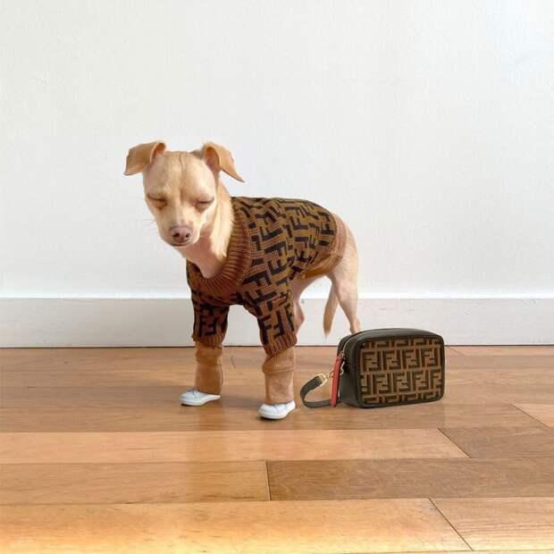 15 клевых фото собаки-инфлюенсера, у которой можно поучиться стилю