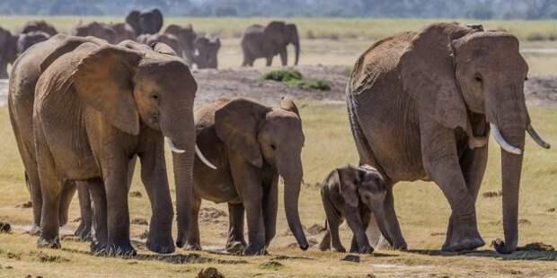 Заблуждения и факты о животных: у старых слонов есть особое место, чтобы там умирать