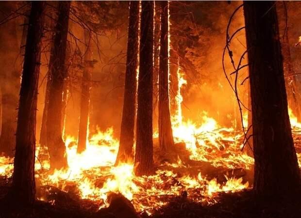 """""""Бессмысленное"""" тушение пожаров на половине территории лесов страны может быть переосмыслено"""