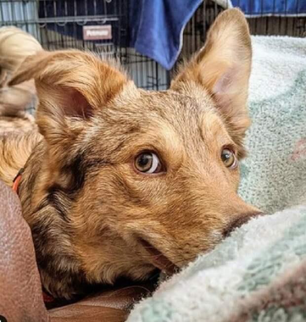 Пес, похожий на койота, бродил по улицам города, мечтая о хозяевах, а судьба занесла его в другую страну