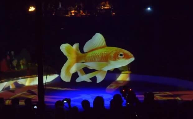 3 крутых фото и видео из немецкого цирка Ронкалли, где настоящих животных заменили на голограммы