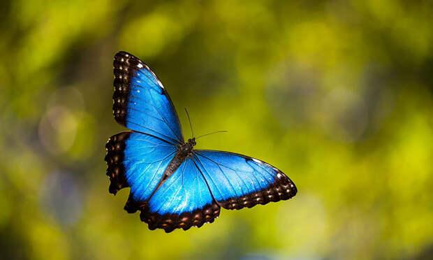 caterpillar-moth-butterfly-before-after-metamorphosis-19-2