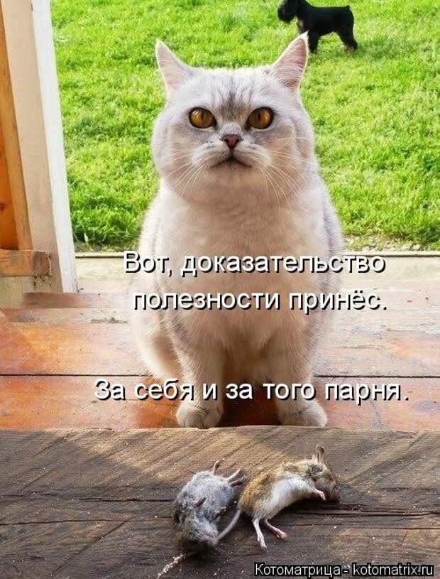 Новая котоматрица для поднятия настроения (30 фото)