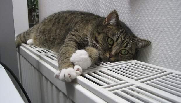 Тепло появится во всех квартирах в Подмосковье до конца пятницы