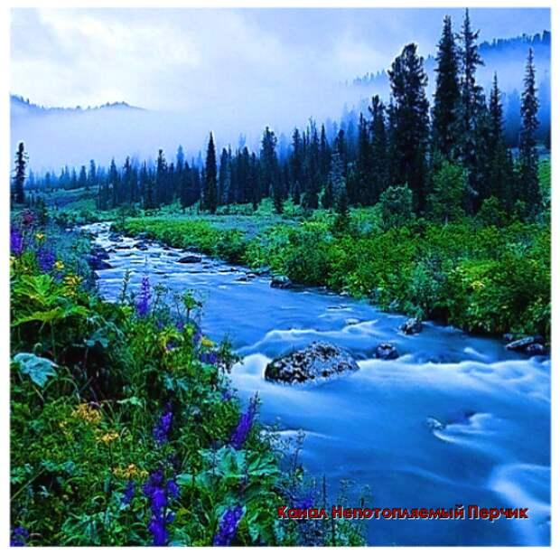 Таежная река. Картинка для Обложки Источник Яндекс картинки