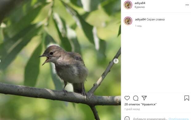 Фото дня: в Куркино прилетела птичка из Африки