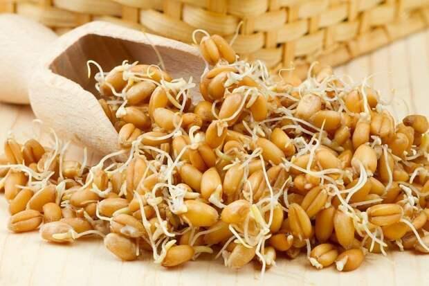 6 преимуществ зародышей пшеницы: от стимуляции иммунной системы до улучшения здоровья мышц