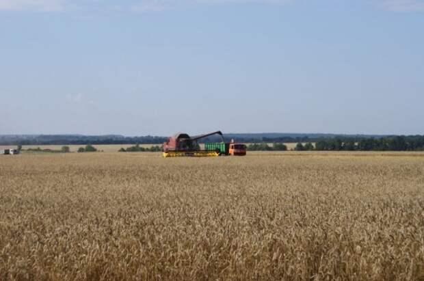 В Крыму из-за резкого ухудшения экологической обстановки пострадал урожай