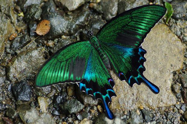 caterpillar-moth-butterfly-before-after-metamorphosis-5-2