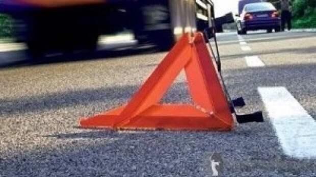 Автоэксперты дали советы по предотвращению столкновений с животными на дорогах