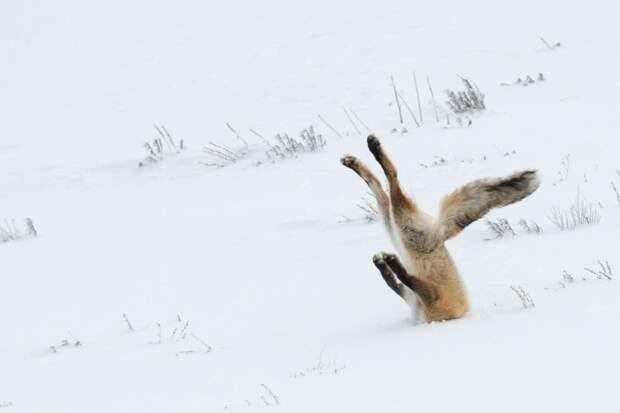 Angela Bohlke / Comedy Wildlife Photo Awards / Getty Images