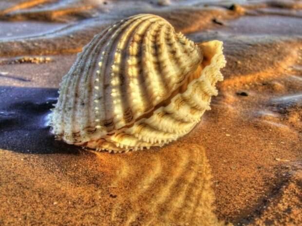 Красивые морские ракушки -- нерукотворные шедевры самой Природы