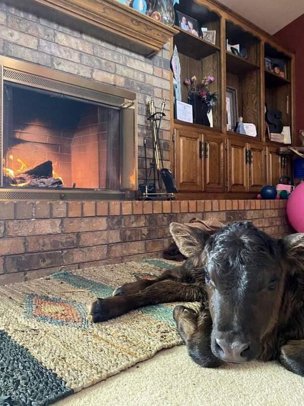 Техасцы забирают домой животных, чтобы согреть их во время снежной бури