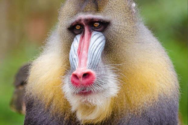 7 самых незаурядных приматов на Земле