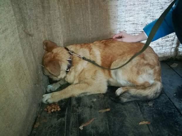 6 месяцев прятался от девушки испуганный щенок, который не видел добра от людей