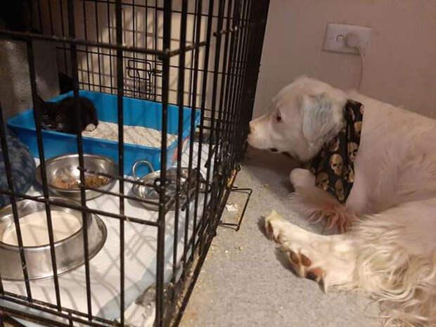 Широ — слепой и глухой пес, но он с огромным удовольствием заботится о других животных