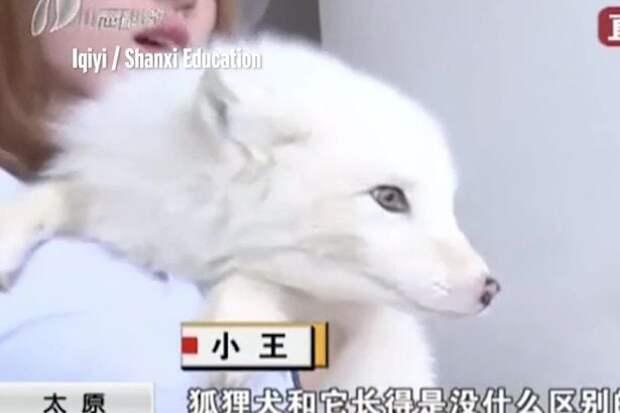 dog-thats-a-fox-1