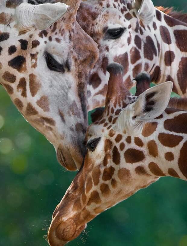 Фотограф доказывает, что животные могут быть еще более влюбленными, чем люди