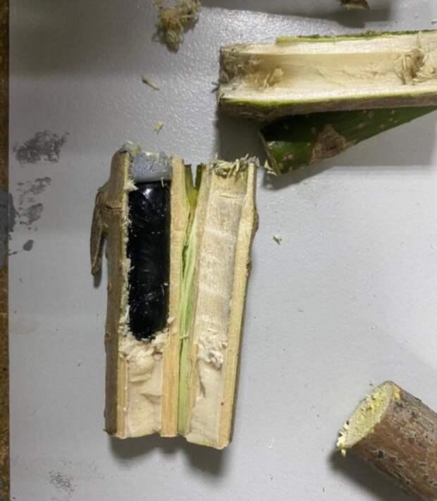 Ростовчанин прятал наркотики вбамбуковых палочках