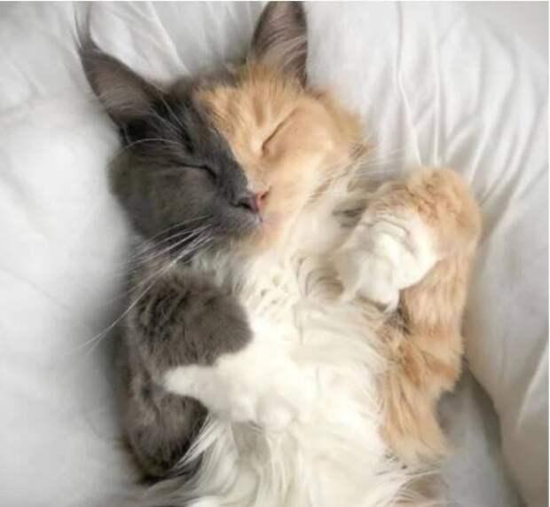 12 котов необычного окраса, которых природа раскрасила с особым настроением