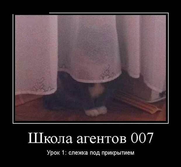 Демотиваторы - 999