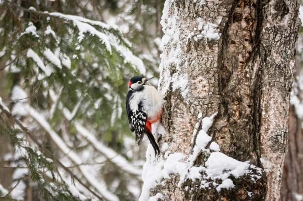С 13 января в Красноярск снова придут суровые сибирские морозы