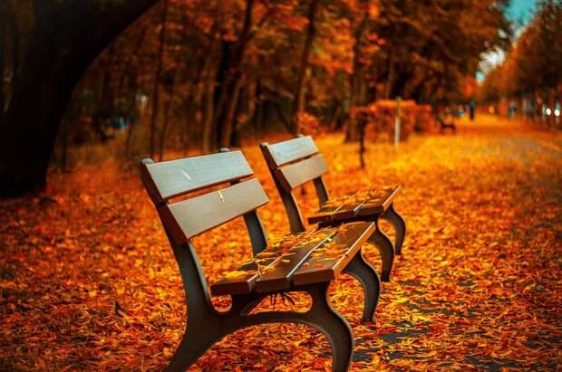 Листья, осень/Фото: pixabay.com