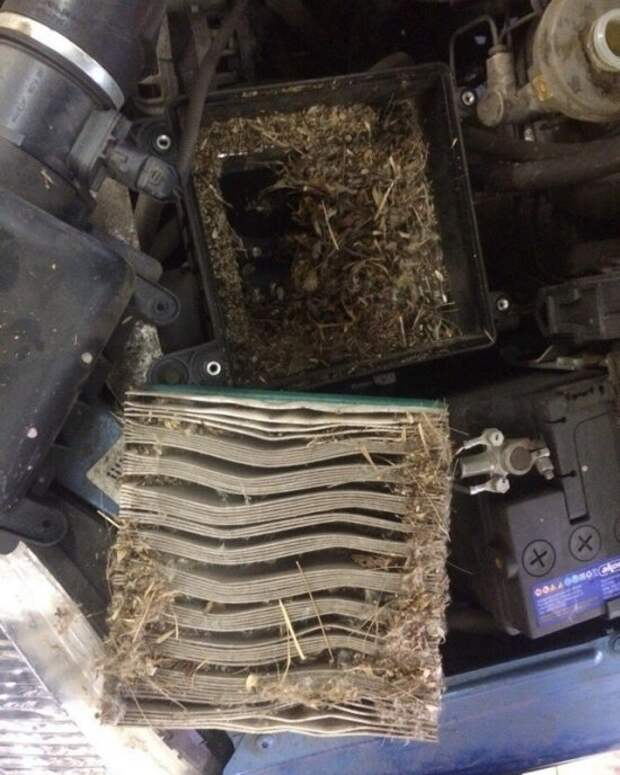 Владелец пригнал Ниву на СТО с жалобами на отсутствие тяги двигателя авто, сто, факты