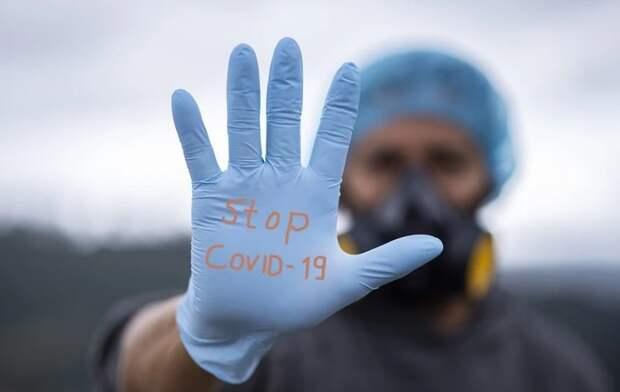 Плато по коронавирусу пока не достигнуто, заявляют в Минздраве России
