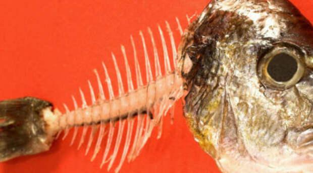 Как вытащить из горла рыбью кость